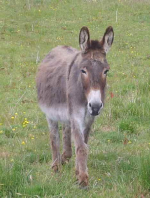 Donkey Best Picture Gallery