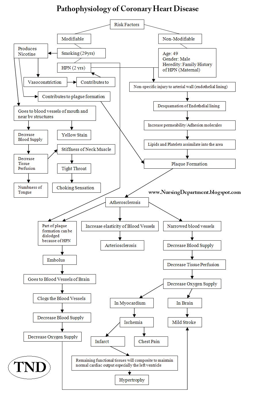 pathophysiology of coronary diseases This chapter deals with diseases of the heart with the following chapter focusing  on diseases of the blood vessels normal cardiac structure and function are.