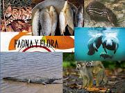 REGION CARIBE (fauna)