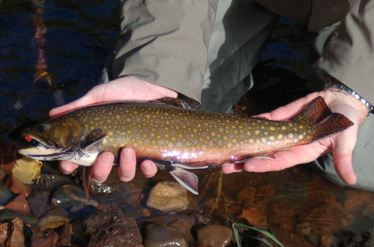 Fishing report update for Trout fishing mn season