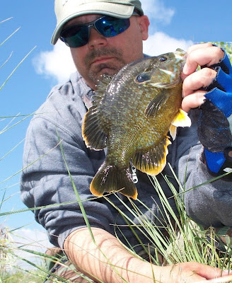 Coloradocasters my obsession with panfish continues for Colorado fish species