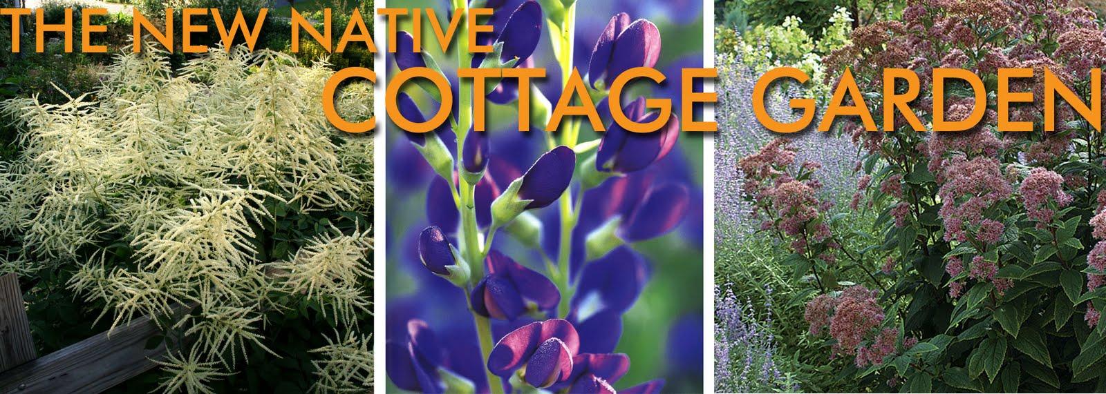 Ten Bold Native Plants To Update Grannyu0027s Cottage Garden