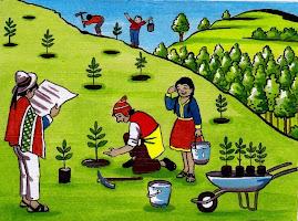Promovamos la forestación y reforestación de los cerros
