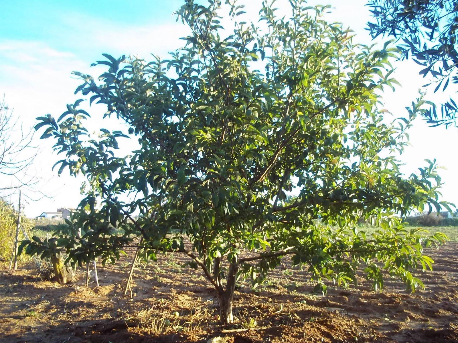 Mi Pequeño Jardin del Arrastre: enero 2011
