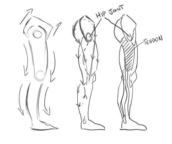 leg muscles drawing - photo #5