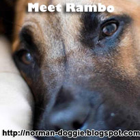 Rambo : RIP little one