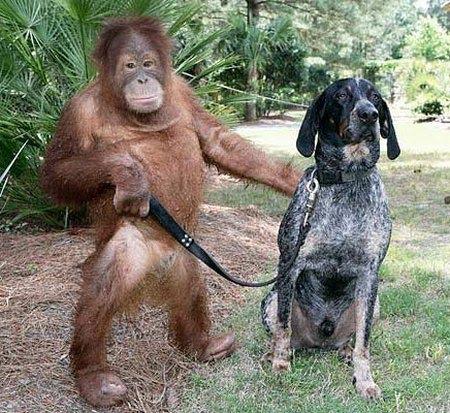 Inilah koleksi foto hewan lucu yang saya jamin belum pernah anda lihat