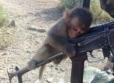 Afghanistan Latih Monyet Untuk Berperang Melawan AS