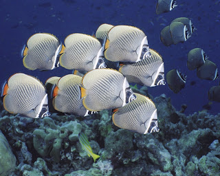 Gambar ikan bawah laut