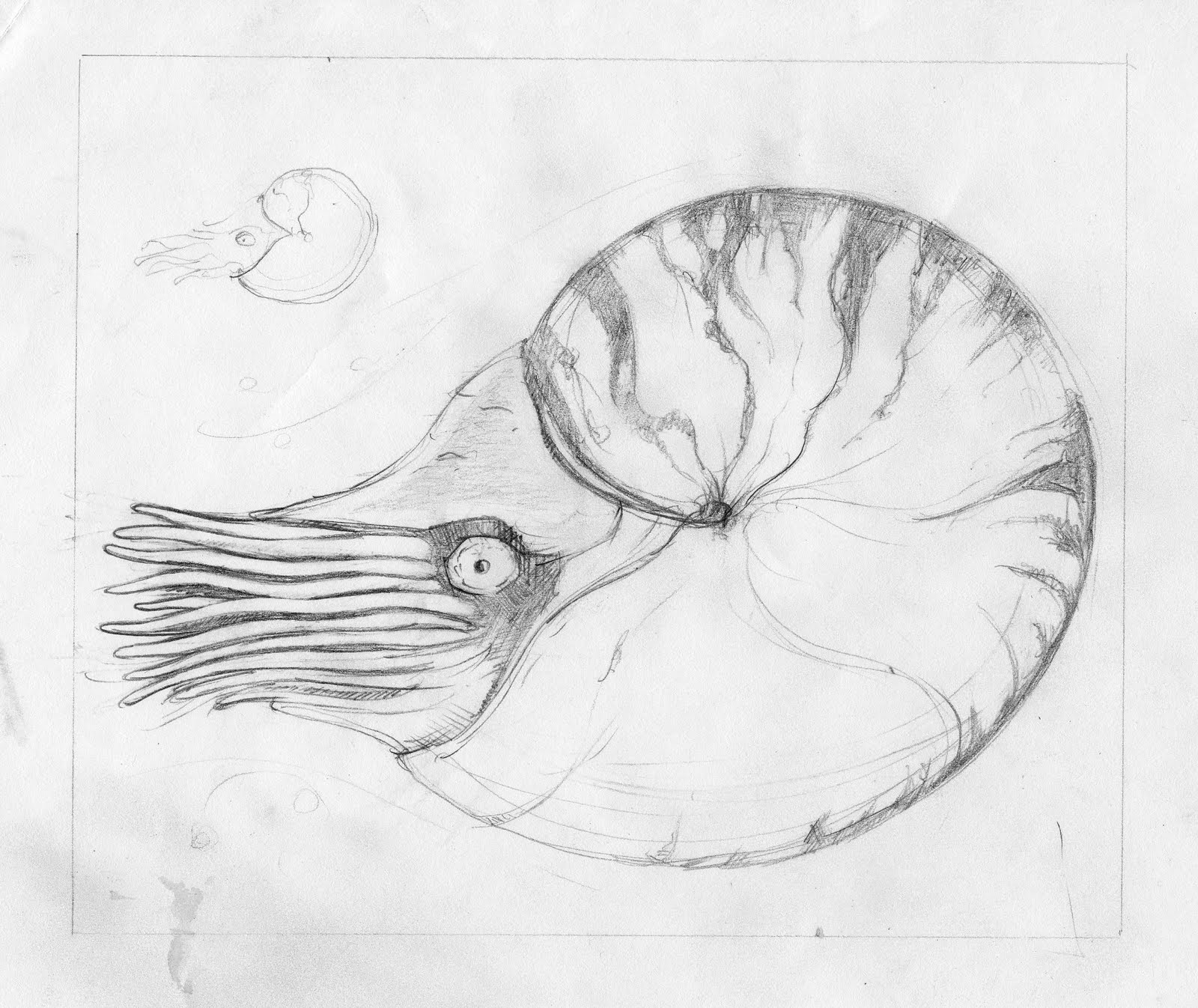 how to draw nautilus