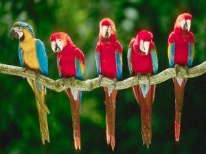Burung kakatua (corbis)