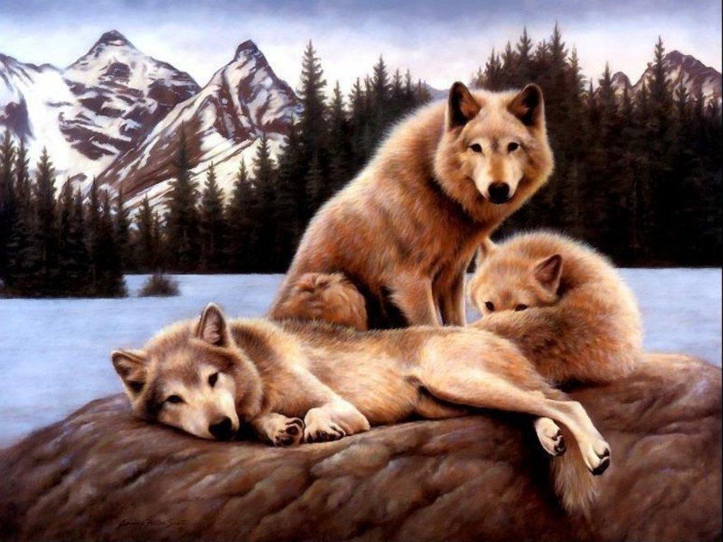 http://2.bp.blogspot.com/_EAViqbzwc_s/TKGT8xdxrgI/AAAAAAAABXg/CRbVleOnyUI/s1600/dog%20(1).jpg