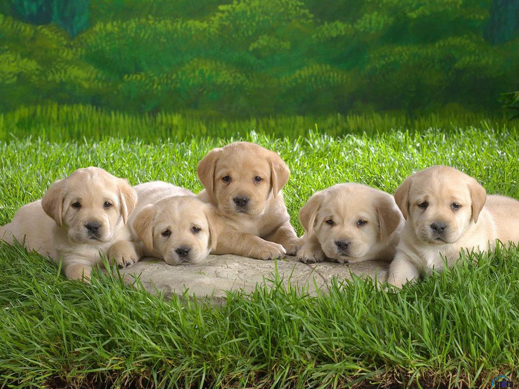 http://2.bp.blogspot.com/_EAViqbzwc_s/TKGUgMBTg7I/AAAAAAAABZA/QCABPCcIBVg/s1600/dog+%2825%29.jpg