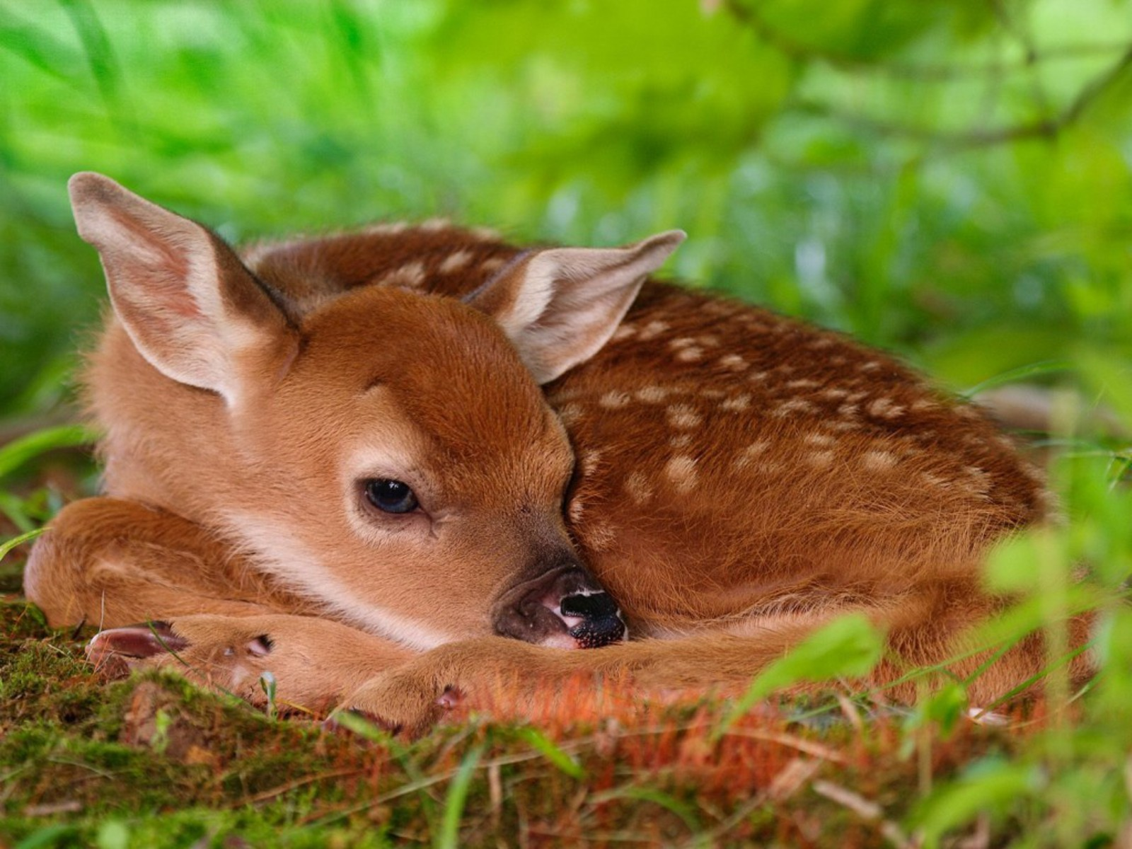 http://2.bp.blogspot.com/_EAViqbzwc_s/TN_PsM9PuuI/AAAAAAAACBs/LHcydAUiVSc/s1600/Animals_Beasts__002583_.jpg