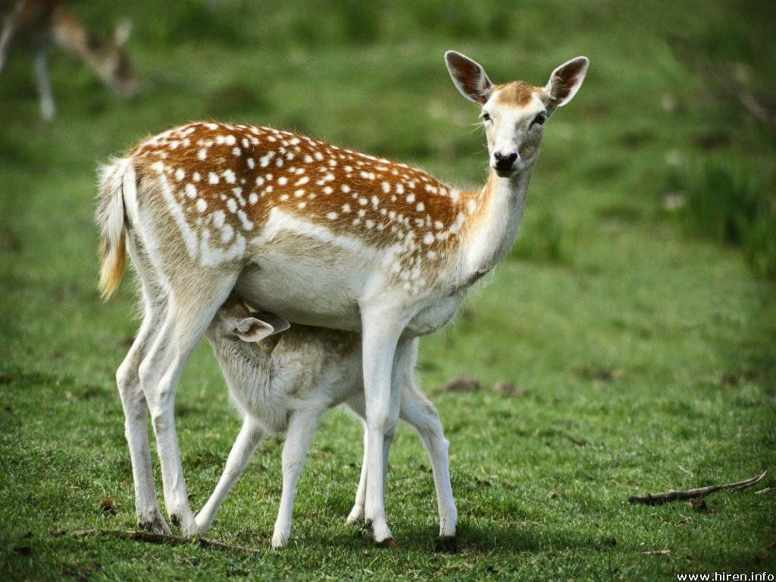 http://2.bp.blogspot.com/_EAViqbzwc_s/TN_R8lNKqxI/AAAAAAAACDM/JDarbZtjsiM/s1600/deer-and-baby-deer.jpg
