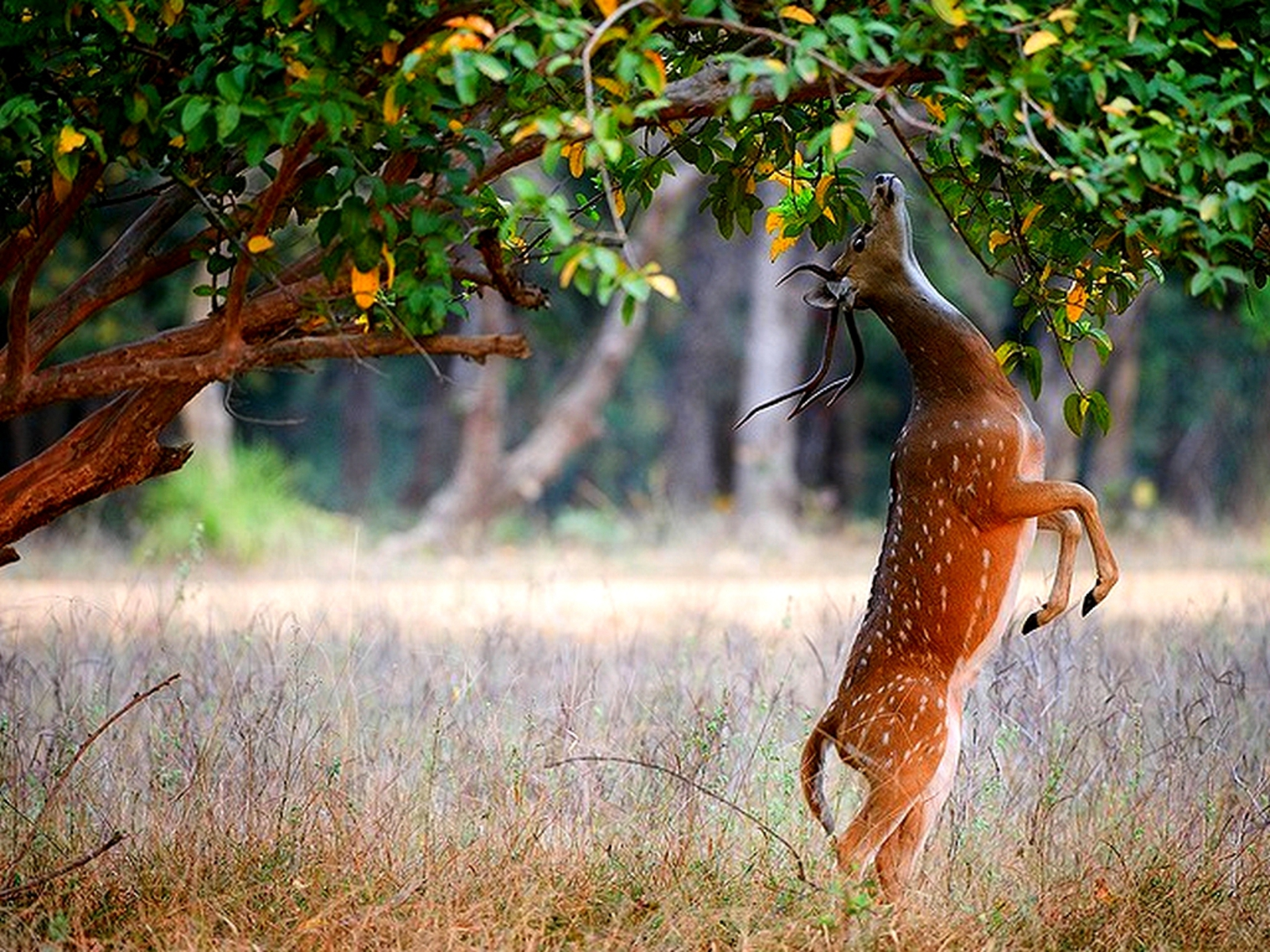 http://2.bp.blogspot.com/_EAViqbzwc_s/TN_RloJP9wI/AAAAAAAACCw/X9yEjZDZoRM/s1600/deer2.jpg