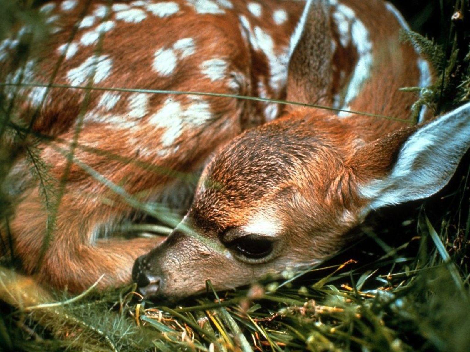 http://2.bp.blogspot.com/_EAViqbzwc_s/TN_RpVhbuAI/AAAAAAAACC4/kACwZH9bW3Y/s1600/Deer_01.jpg