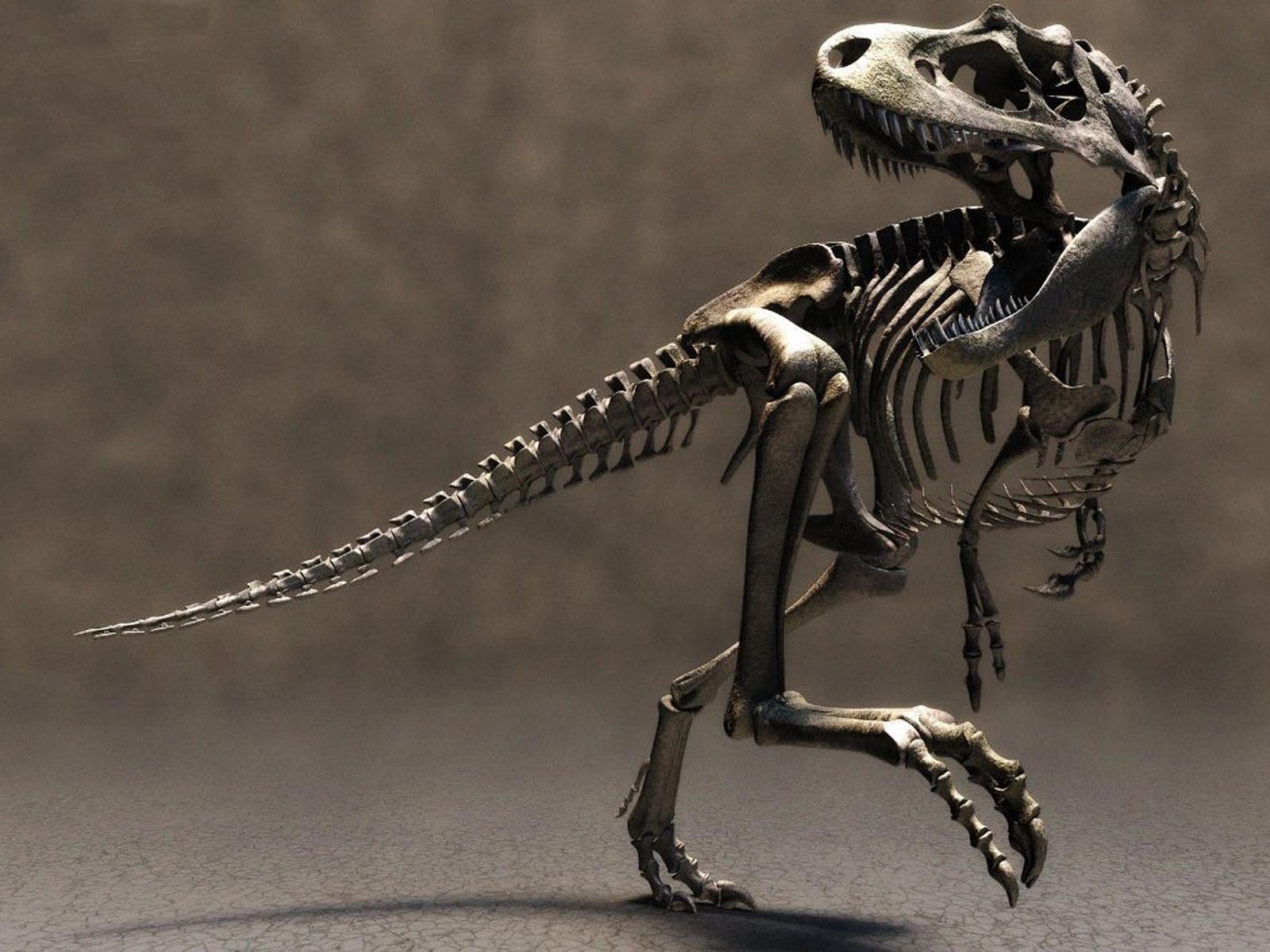 http://2.bp.blogspot.com/_EAViqbzwc_s/TOOPUxoothI/AAAAAAAACRc/_CjTtRyEu54/s1600/dinosaur.jpg