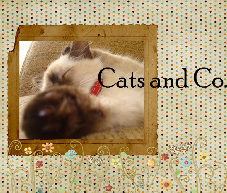 Seja bem vindo Cats and Co.