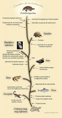 evolucion ornitorrinco
