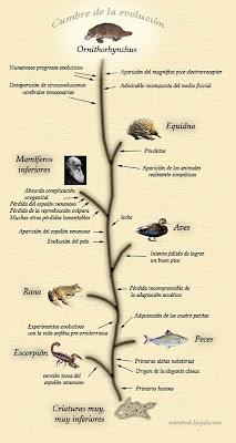 evolucion ornitorrinco