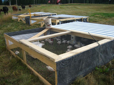Words of the wise acres the chicken tractor for Big chicken tractor