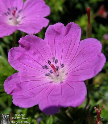 Oregon art guy blog home depot parking lot flowers for Oregon craft floral