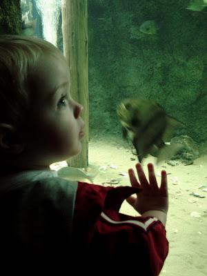 Wordless Wednesday…Aquarium Sweetheart