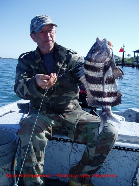 Kayak angling for big fish fishing report 1 15 11 for Sheepshead fishing rigs