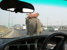 Elephant on the Road, New Delhi