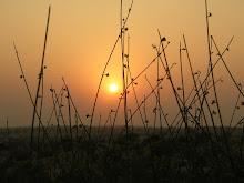 Desert sunset, Manvar Camps, Rajasthan