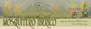 Iberian Chiffchaff