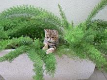 Entre Plantas (1)