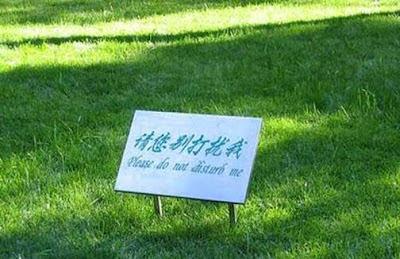 weird, funny, grass, damo
