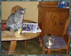 Wir Katzen