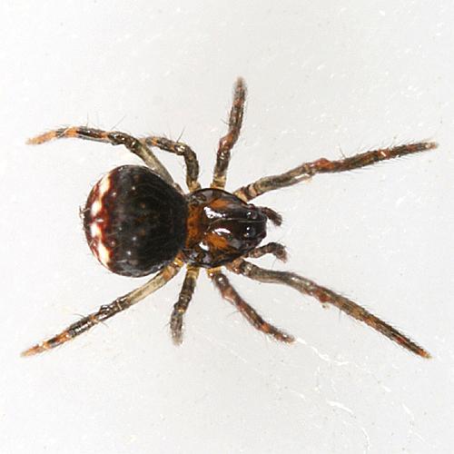 a tiny spider