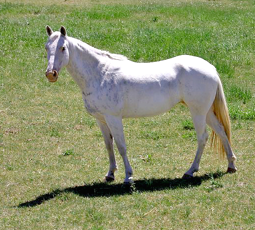 a photograph of a white horse standing in a field of green