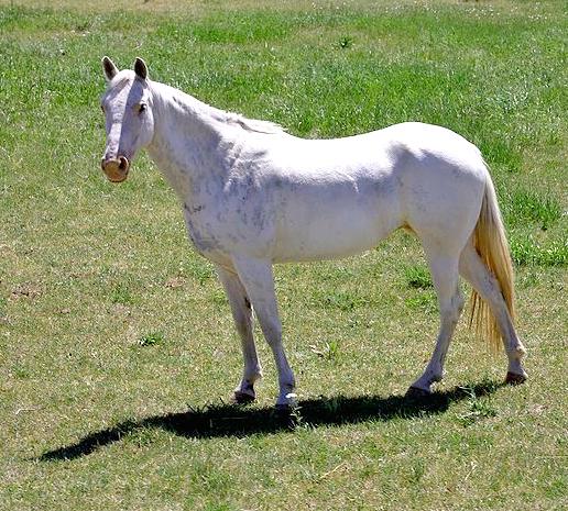 real white unicorn