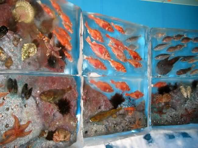 colorful fish encased in ice in a frozen aquarium in Japan