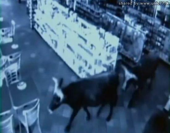 http://2.bp.blogspot.com/_EHi0bg7zYcQ/TIhoCxUEp6I/AAAAAAAAAeI/AE-VQwDaars/s1600/cows_out_04.jpg