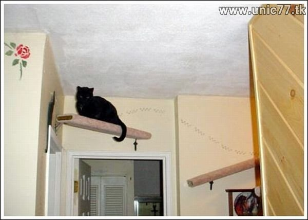 http://2.bp.blogspot.com/_EHi0bg7zYcQ/TIrG782O5tI/AAAAAAAAA1Q/_oplnEjwm68/s1600/fun_for_cats_32.jpg