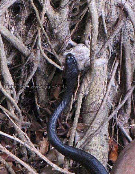 http://2.bp.blogspot.com/_EHi0bg7zYcQ/TJhUk-OECBI/AAAAAAAAE6Q/ASDS-DWxkuQ/s1600/toad_vs_snake_640_03.jpg