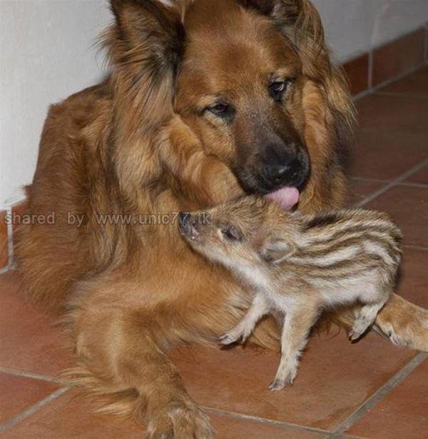 http://2.bp.blogspot.com/_EHi0bg7zYcQ/TKVW0QGh70I/AAAAAAAAI28/x6-KjT5NWKM/s1600/animal_adoptions_06.jpg