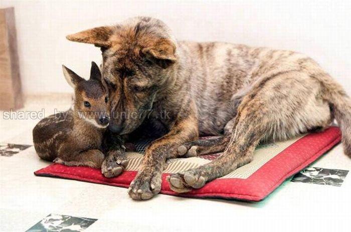 http://2.bp.blogspot.com/_EHi0bg7zYcQ/TKVW0_4b1uI/AAAAAAAAI3M/gEubSlUQPfk/s1600/animal_adoptions_08.jpg