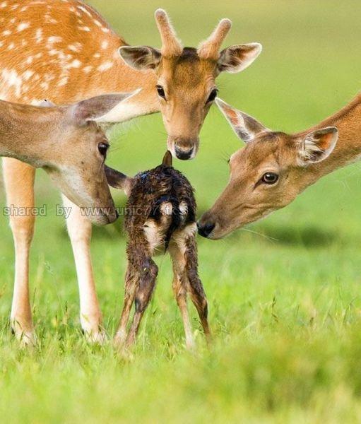 http://2.bp.blogspot.com/_EHi0bg7zYcQ/TLahgxPifPI/AAAAAAAANGc/ydpvcedBDVc/s1600/these_funny_animals_515_640_08.jpg