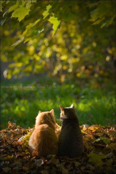 http://2.bp.blogspot.com/_EHi0bg7zYcQ/TLajZ7TCVmI/AAAAAAAANHU/o-re2sp2oGg/s1600/these_funny_animals_515_640_15.jpg