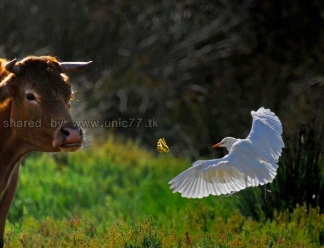 http://2.bp.blogspot.com/_EHi0bg7zYcQ/TLajZWI0TbI/AAAAAAAANHE/CY-bb69o66Q/s1600/these_funny_animals_515_640_13.jpg