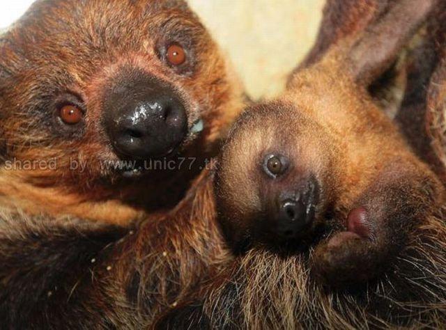 http://2.bp.blogspot.com/_EHi0bg7zYcQ/TLanlMkhUVI/AAAAAAAANI0/0e-VhEc6NdQ/s1600/these_funny_animals_515_640_27.jpg