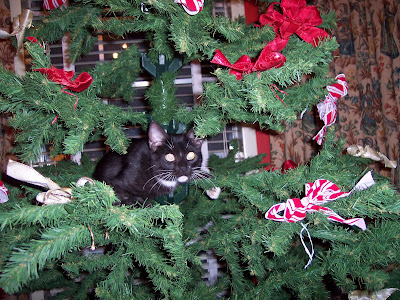 Eliot in the Xmas Tree