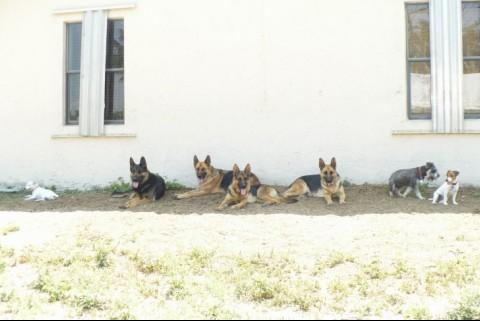 Nuestra familia canina